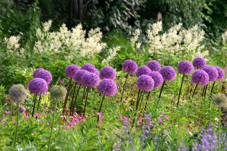 Ökologisch-Botanischer Garten der Universität Bayreuth