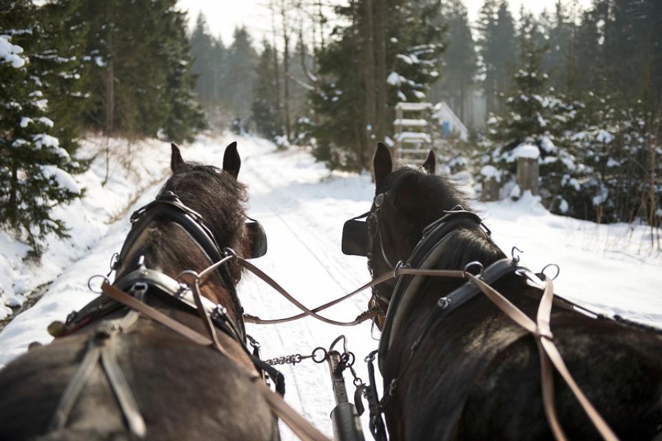 Pferdeschlittenfahrten Dengler Hof