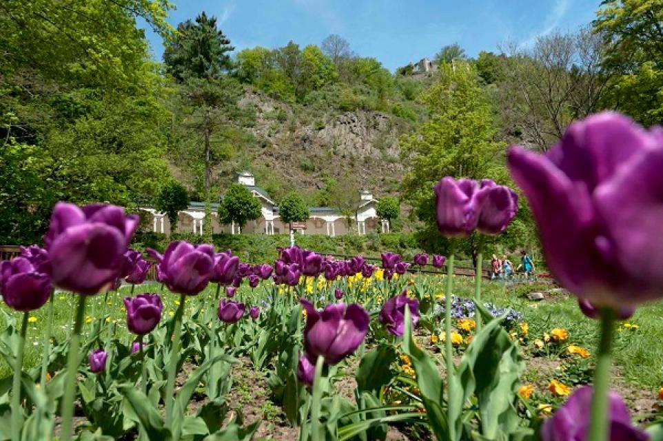 Dendrologischer Garten Rotherspark