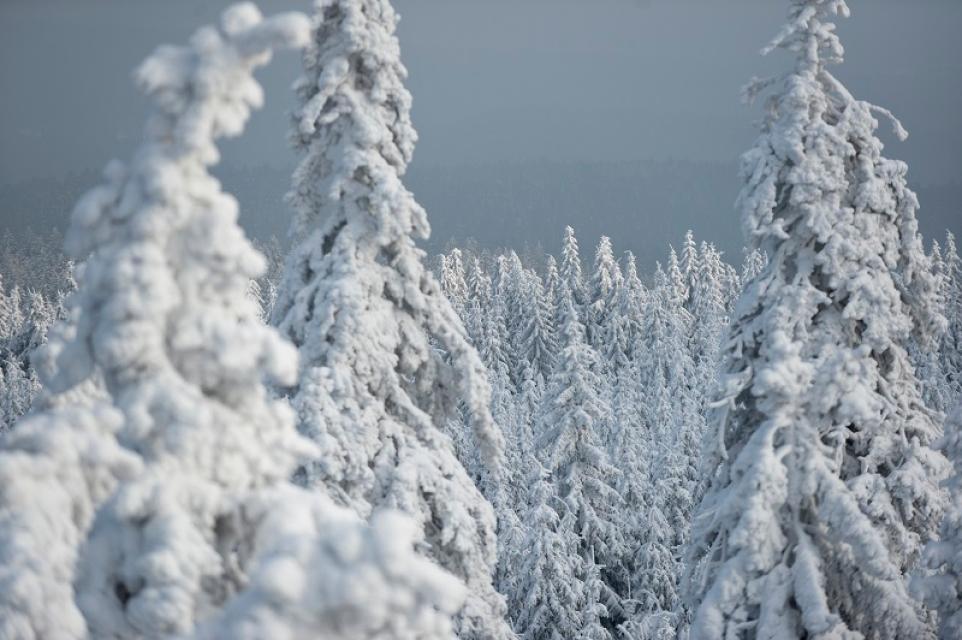 Schneeschuhwanderungen mit der Steinwaldclaudia