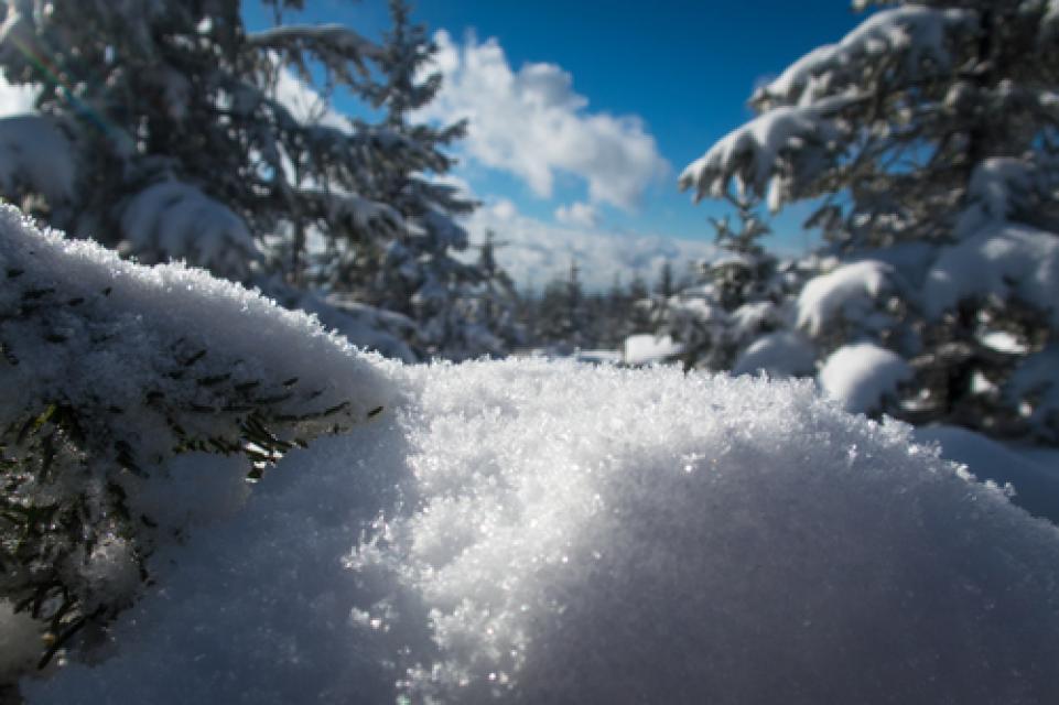 Winterwandern auf dem Walderlebnispfad