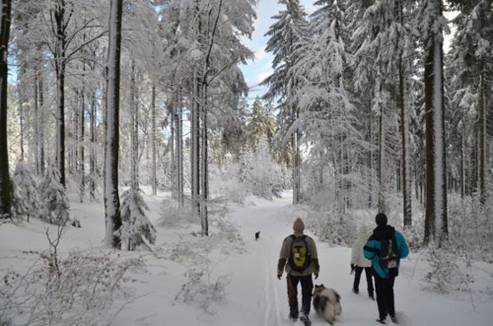 Winterwanderweg Neugrün - Oberwarmensteinach