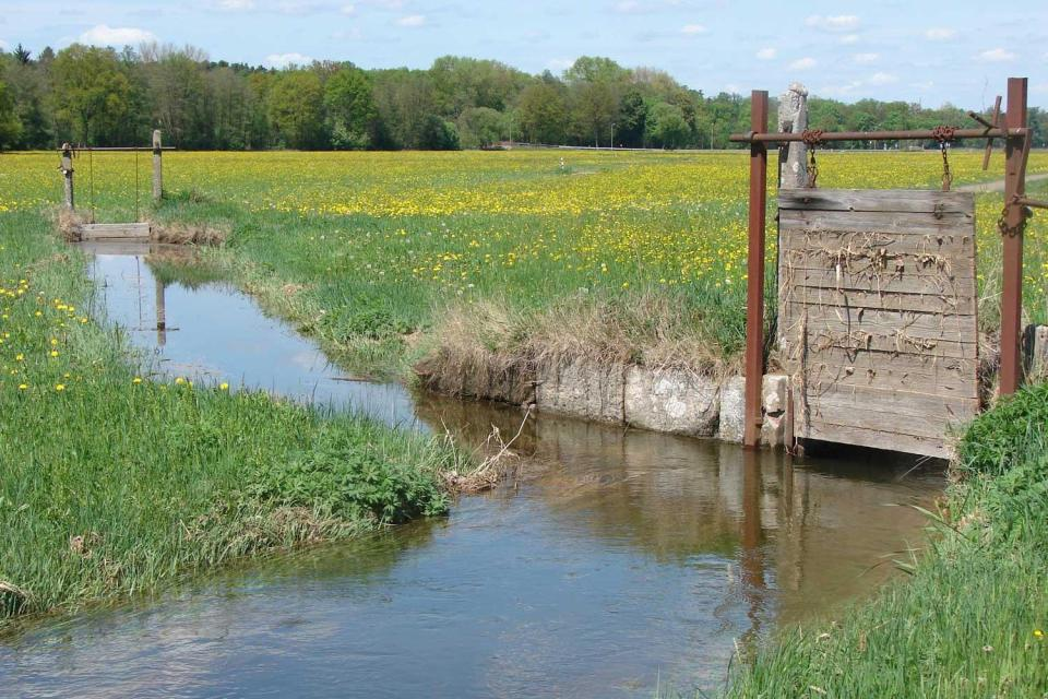 Wässerwiesen-Projekt