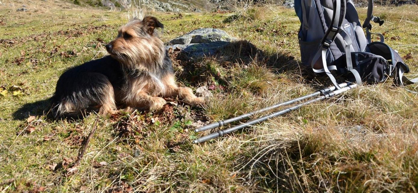 Wanderung bei Leutenbach mit dem Hund
