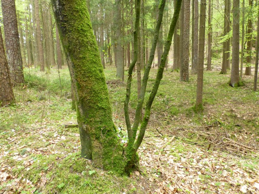 Einführung ins Waldbaden