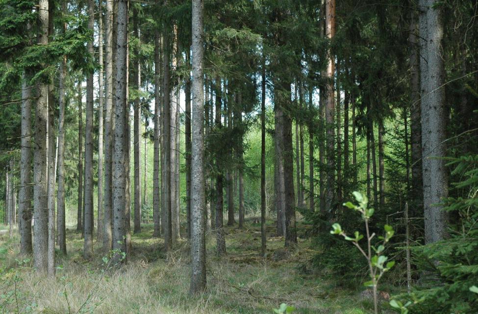 Waldbaden - Achtsamkeit im Wald