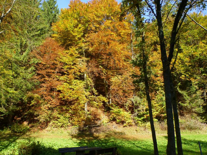 Herbstwanderung des FSV Wolfsberg