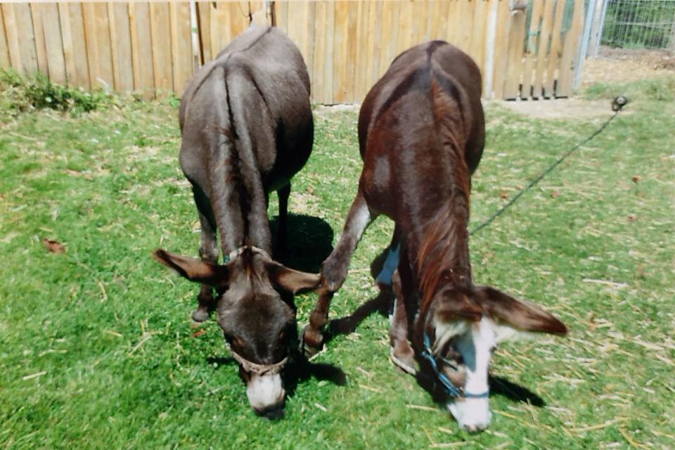 Eselwandern - Baumschule Patzelt