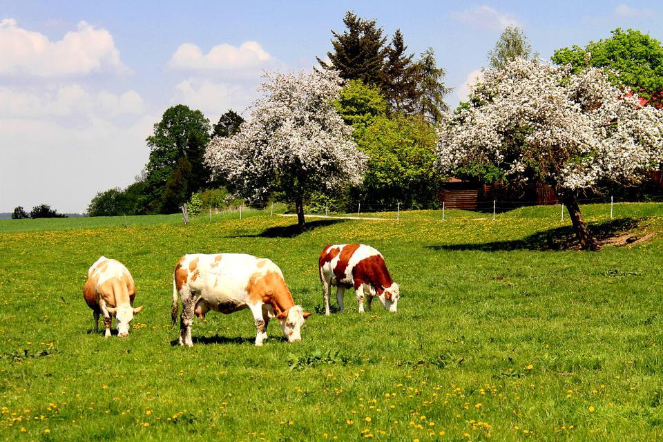 - Landkreis Kulmbach