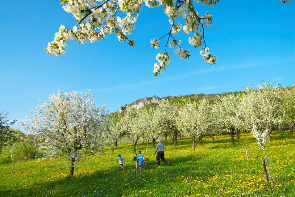 Zur Kirschblüte in´s Trubachtal