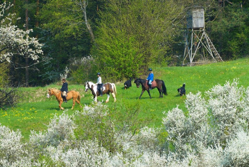 Pferde-, Pony-, und Eselparadies Sanspareil