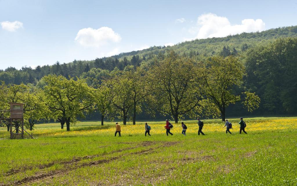 - Wandern über grüne Wiesen