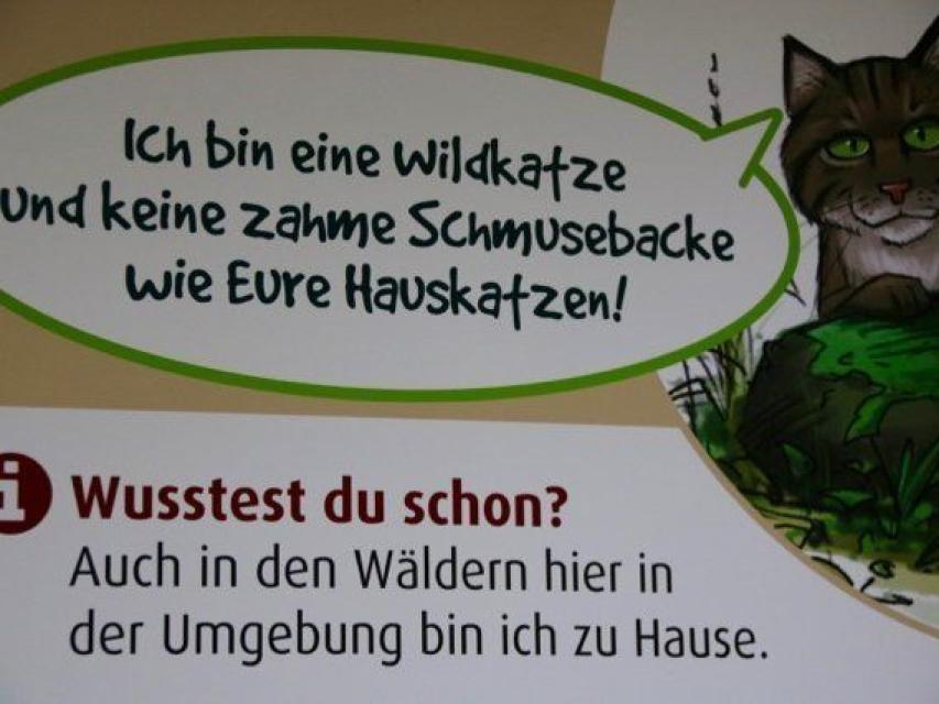 - Wildkatzen in der Fränkischen Schweiz