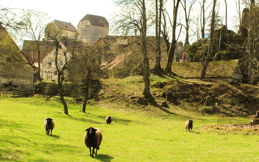 - Burg Hiltpoltstein von Norden aus