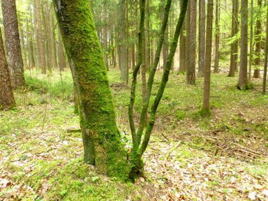 Naturlehrpfad Obertrubach