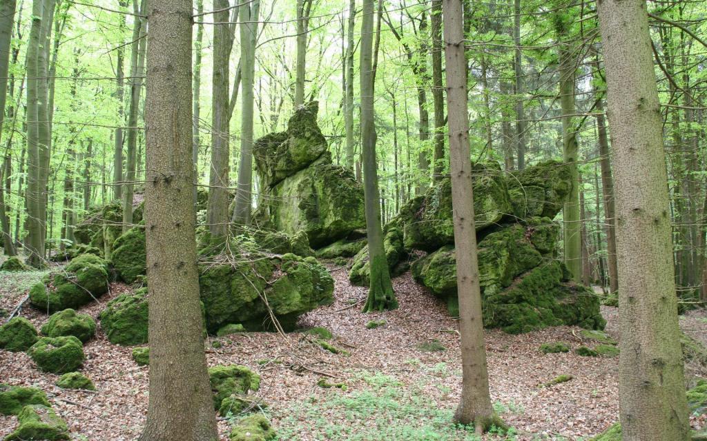 Bezaubernde Wacholderheide bei Wattendorf (Blühender Jura)