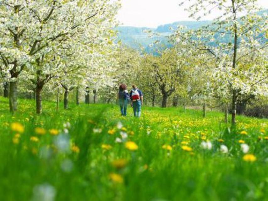 Pretzfelder Kirschenlehrpfad (Naturlehrpfad)
