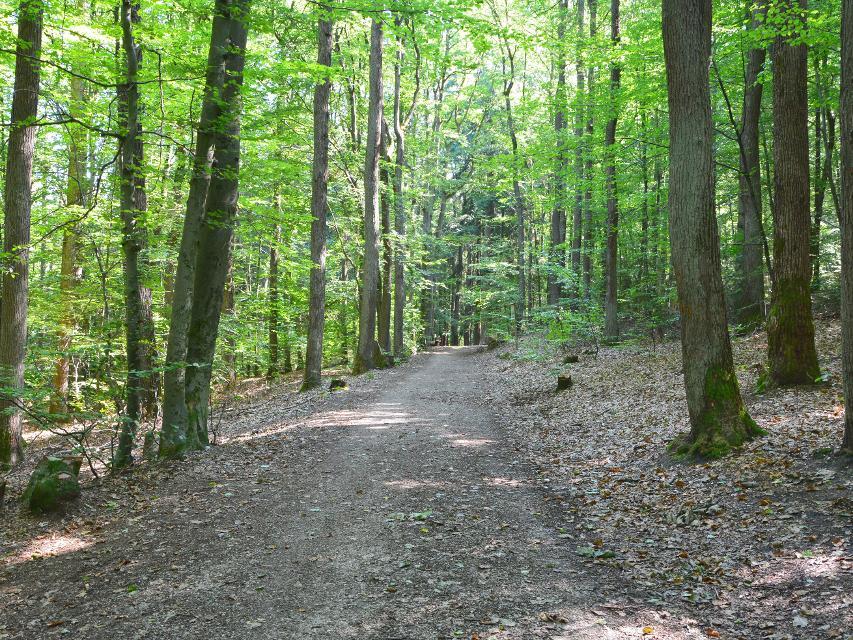 Wanderweg im Kellerwald