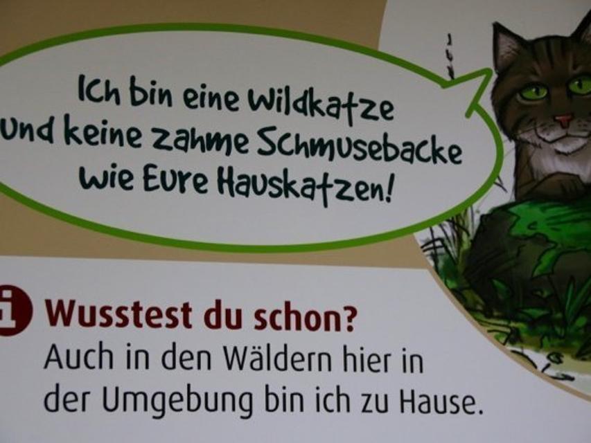 Wildkatzen in der Fränkischen Schweiz