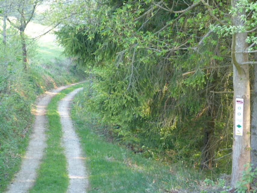 Wegefuehrung naturbelassener Weg