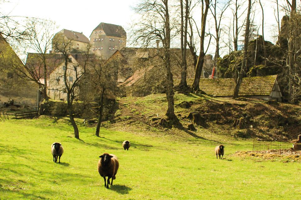 Burg Hiltpoltstein von Norden aus