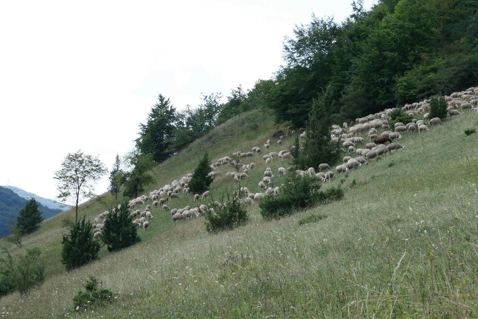 Schafe Löffelstein