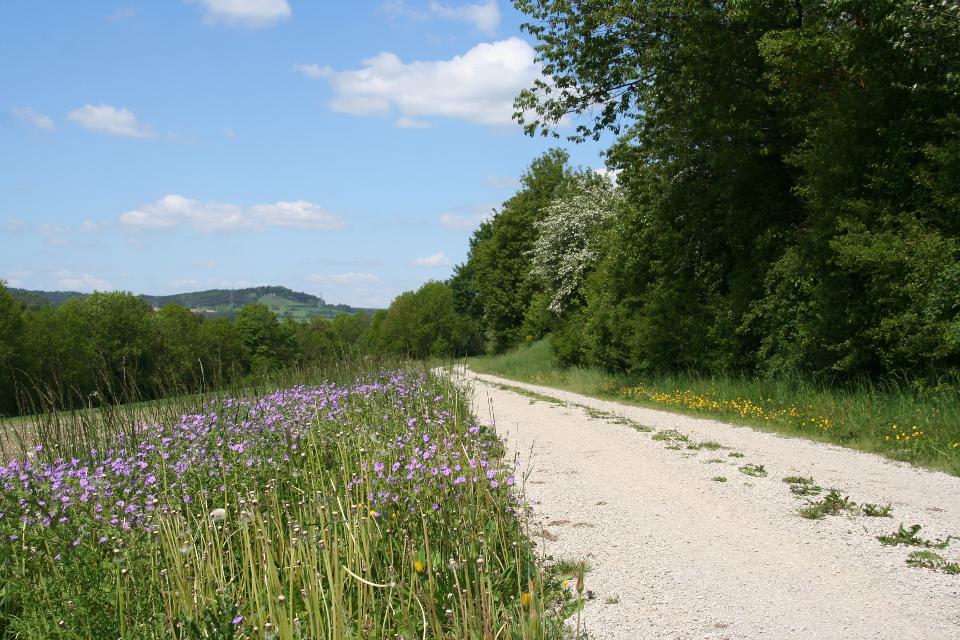 Wanderweg Heiligenstadt