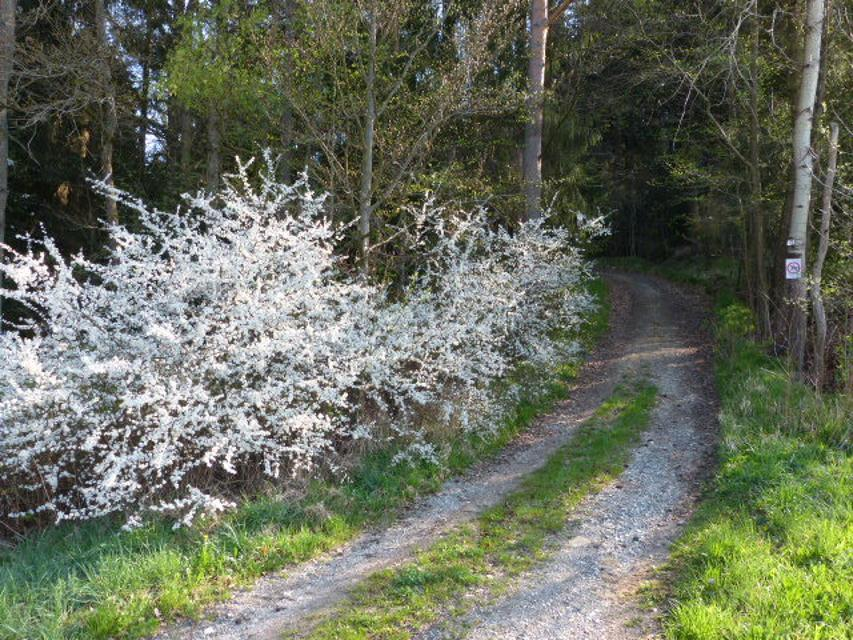 Waldeintritt in Richtung Geislareuth