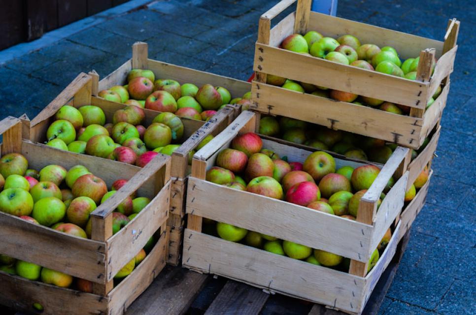 Frische Äpfel warten auf Weiterverarbeitung