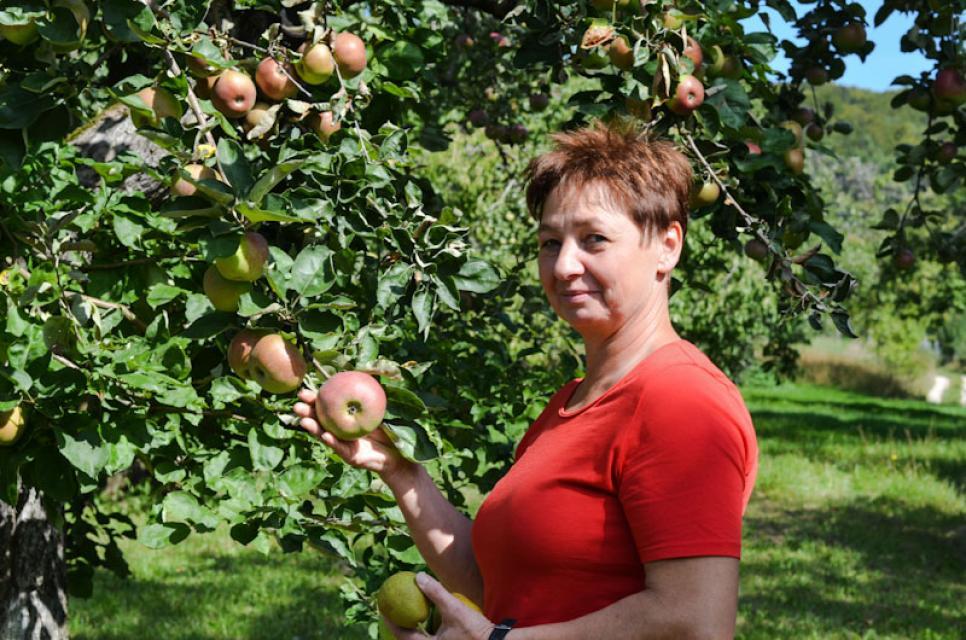 Hier reifen Winterrambur. Die Äpfel werden im Oktober geerntet.