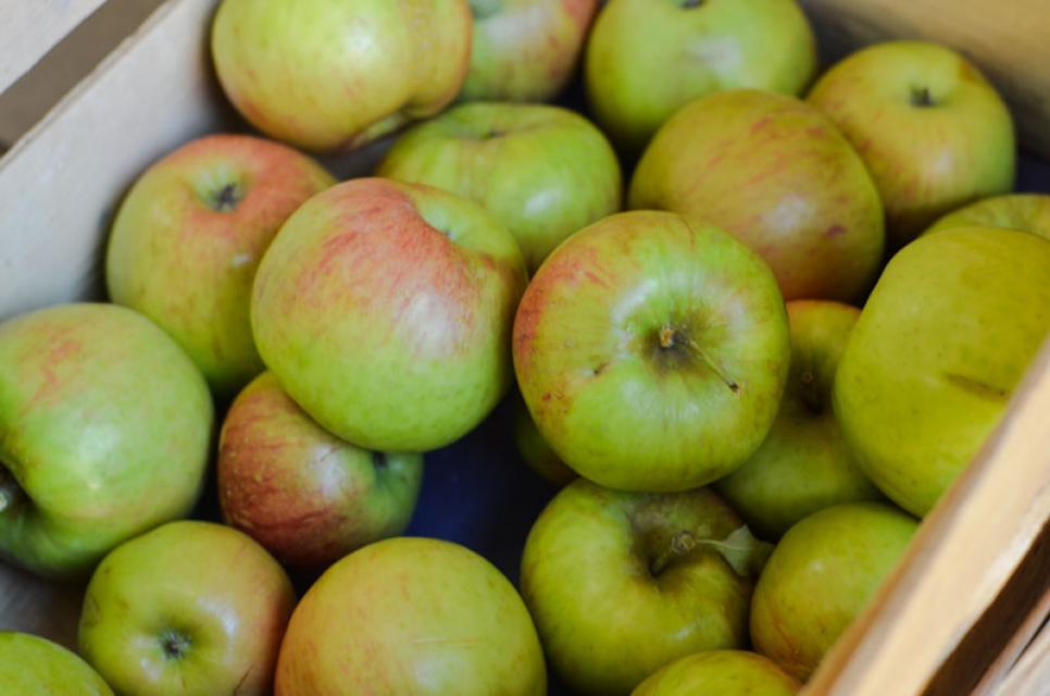 Im September gibt es aromatische Äpfel direkt ab Hof