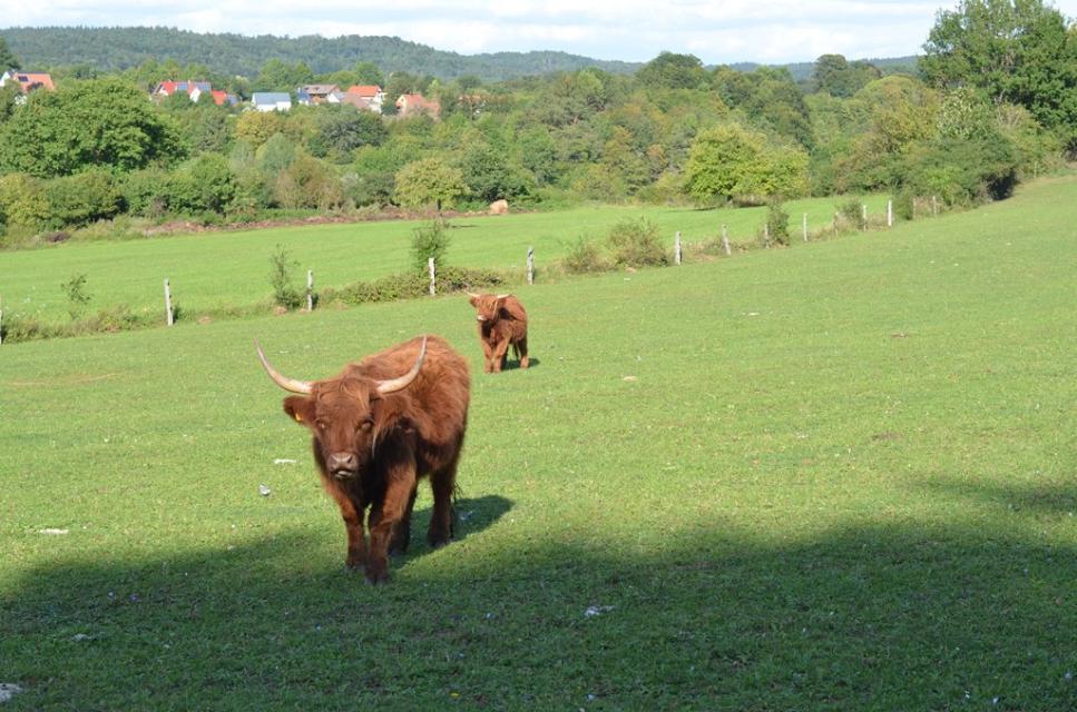 Highland Cattle Zucht, Egloffstein
