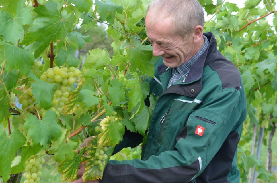 Auch Weintrauben wachsen in Ermreus