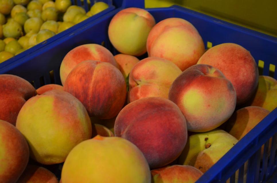 Auch fruchtige Pfirsiche wachsen auf den Obstwiesen von Herbert Erlwein