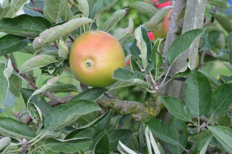 Unterwegs in den Obstgärten