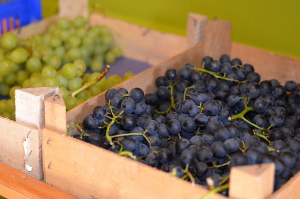 Vom Obstgarten kommen die Trauben direkt in den Hofladen