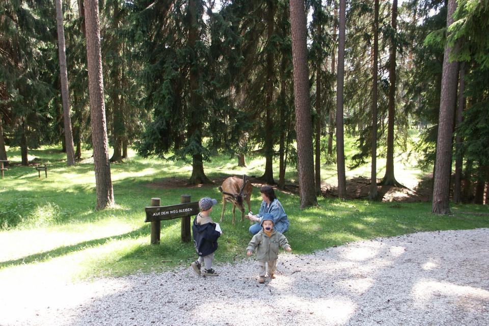 Im Wildpark Veldensteiner Forst
