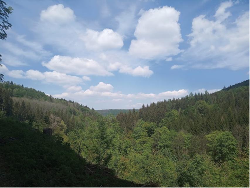 Rundweg um den Altenberg - Grün Spitze