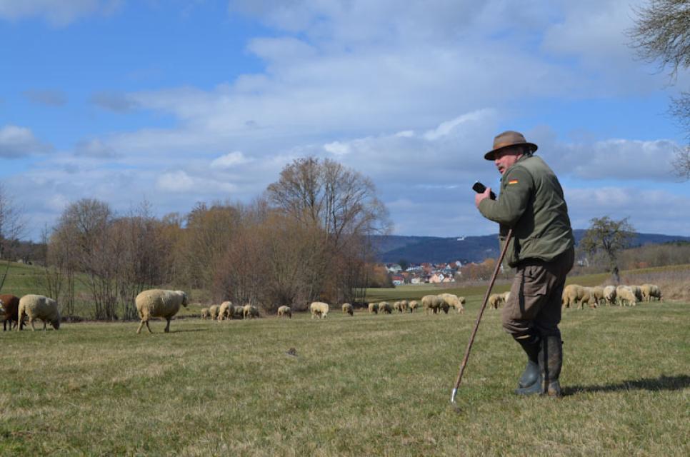 Als Schäfer ist Georg Distler nicht nur Landwirt und Landschaftspfleger, sondern auch Metzger und Marketingmanager, der das Fleisch der Tiere selbst verkauft.