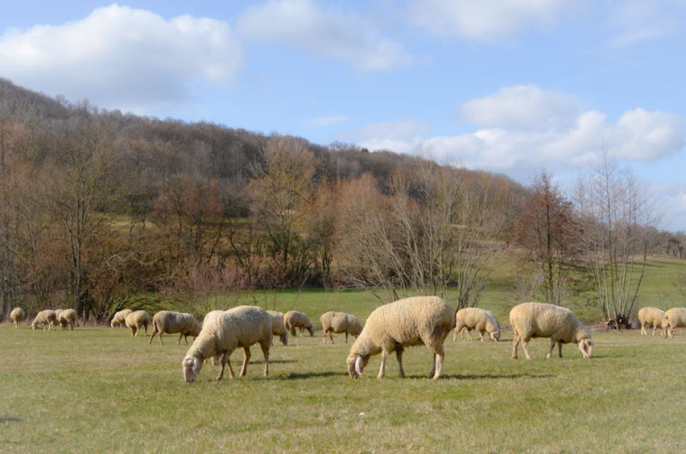 Februar 2021. Jetzt sind es nur noch wenige Tage, bis die Schafe in ihren Stall nach Egloffstein ziehen
