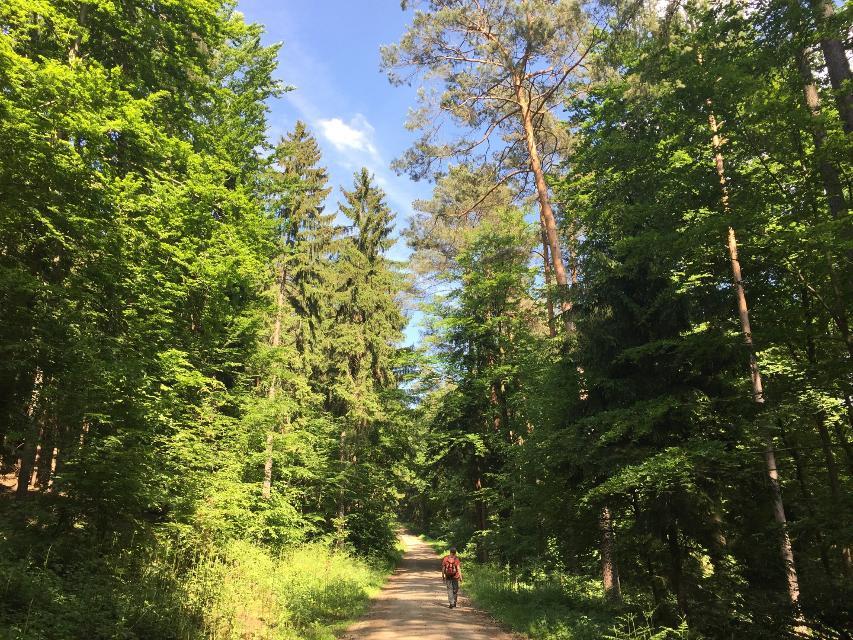 Nördliches Ellertal – Rundweg am Stammberg