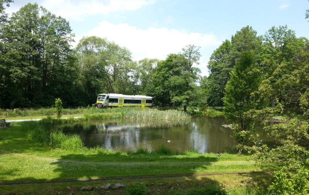 Teich in Froschgrün