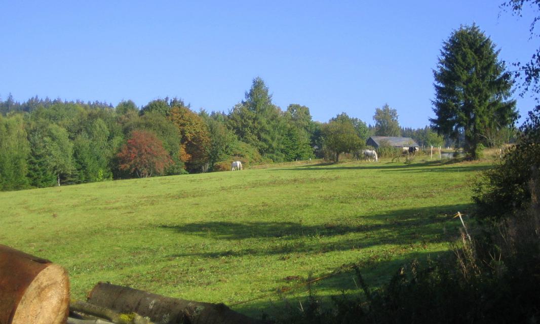 Blick nach Buckenreuth