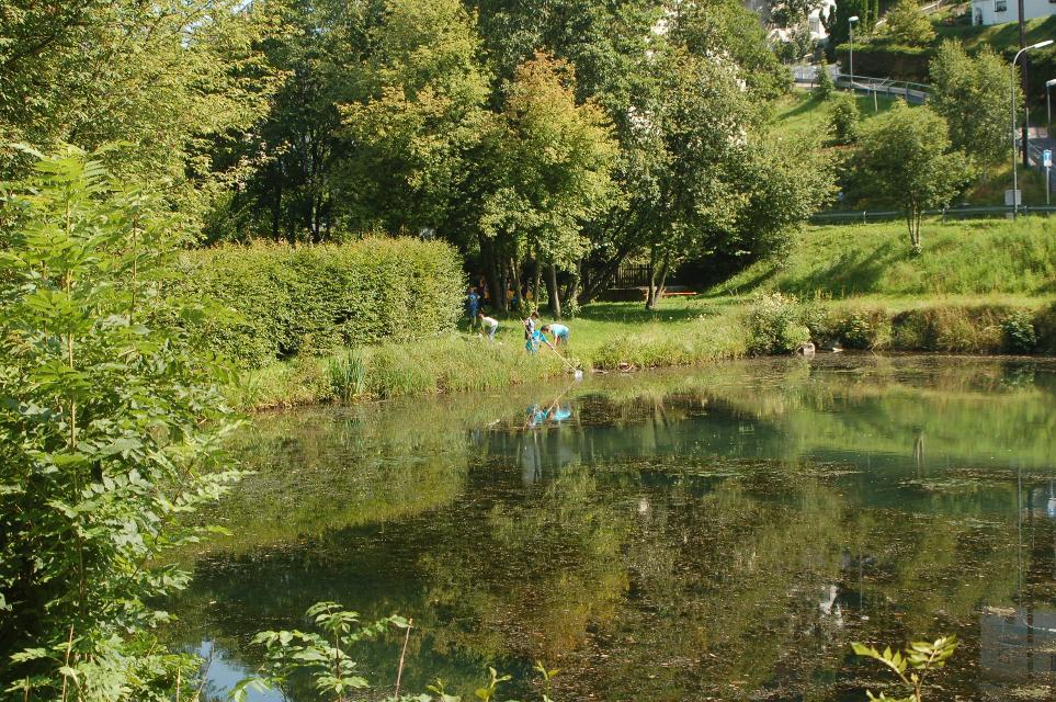 Teich in Tettau