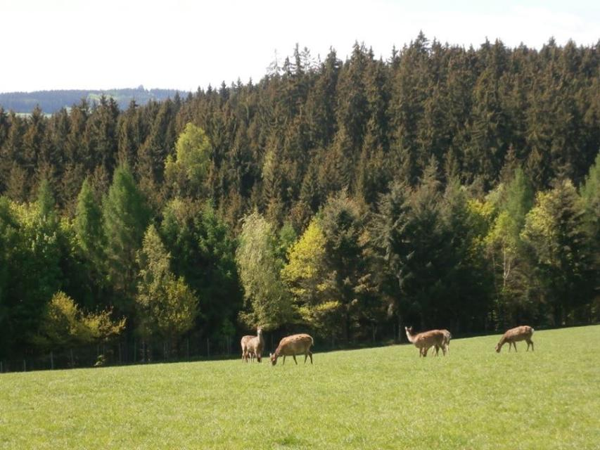 Wildgehege Pechreuth