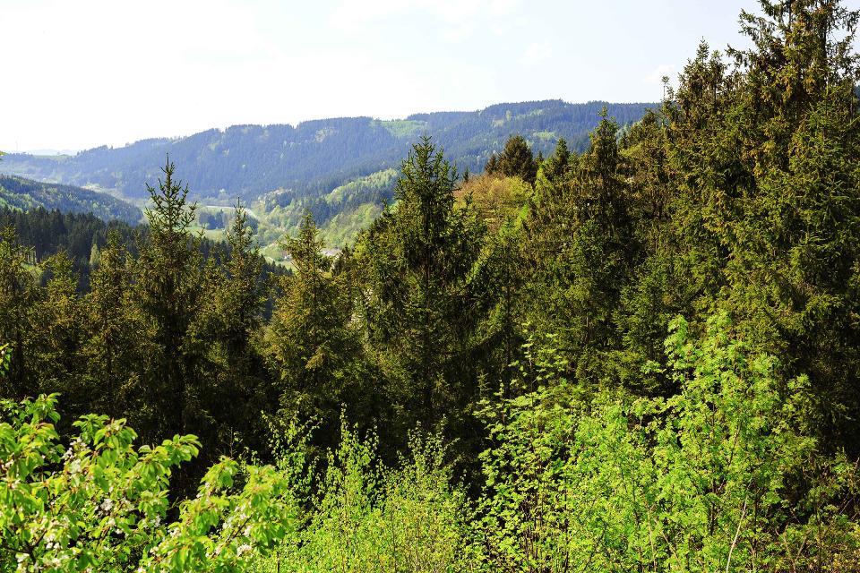 Blick nach Steinwiesen