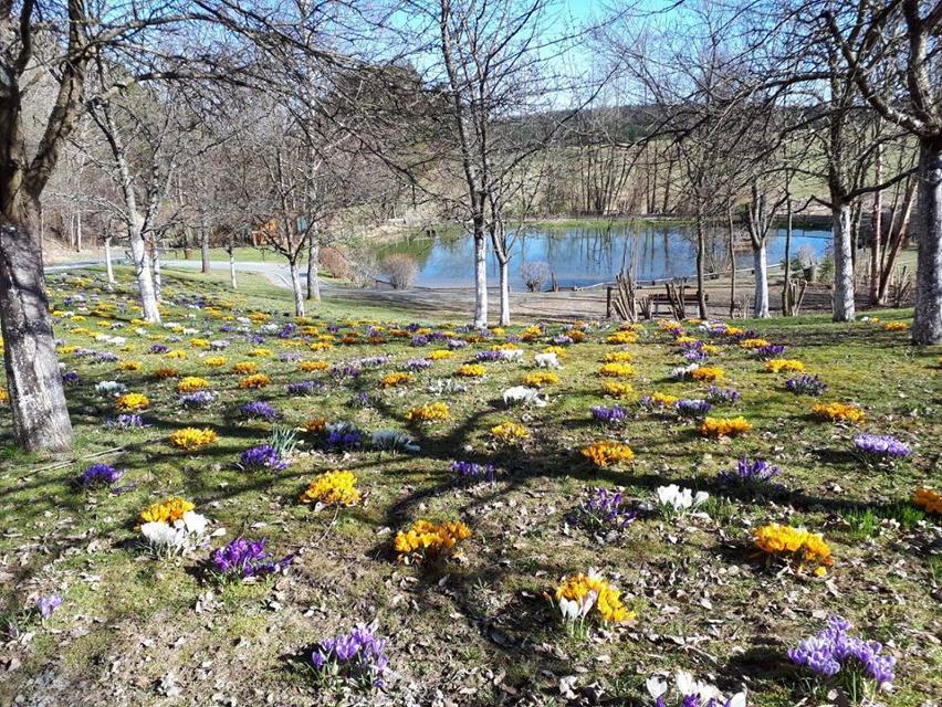 Frühling am Wanderheim