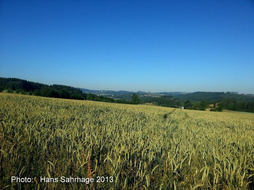 Blick östlich Heinrichsdorf Richtung Schwarzenbach/Wald