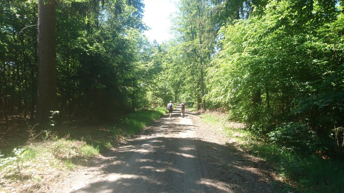 Im Wald bei Oberleupoldsberg