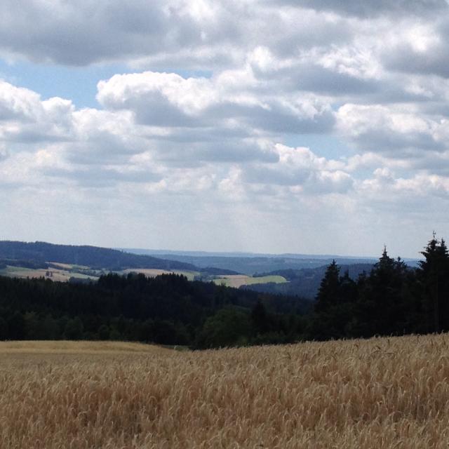 Blick vom Pfaffenberg